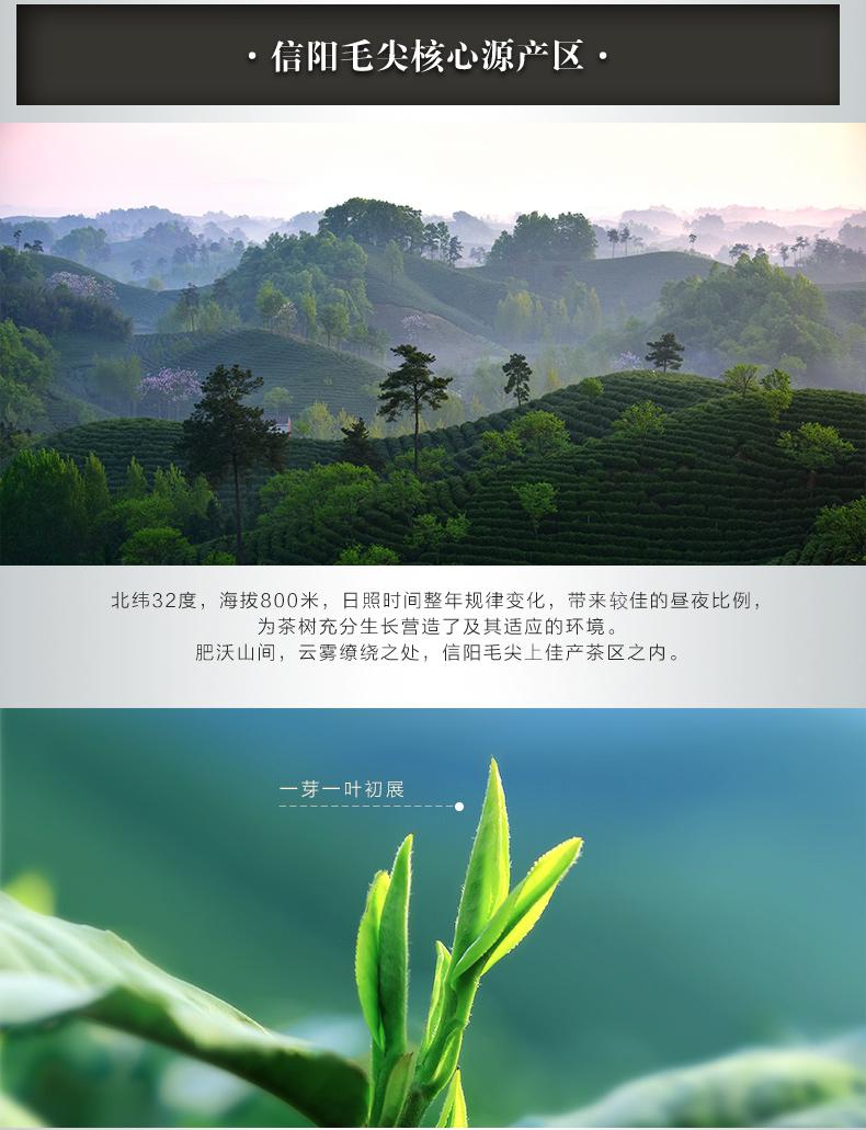 绿色大师之作信阳毛尖包装盒【纯生态绿色】环保礼盒茶 2019年新款 125g*2装(不单卖)
