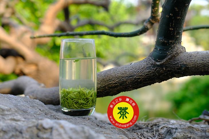 2021年新茶你最期待信陽毛尖哪方面的消息 www.shihegang.com