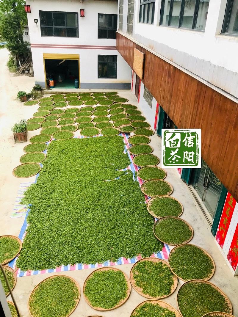 浉牌 信阳白茶 2021年浉河港高山牡丹王125克/袋 买一送一 简素牛皮纸袋装白茶