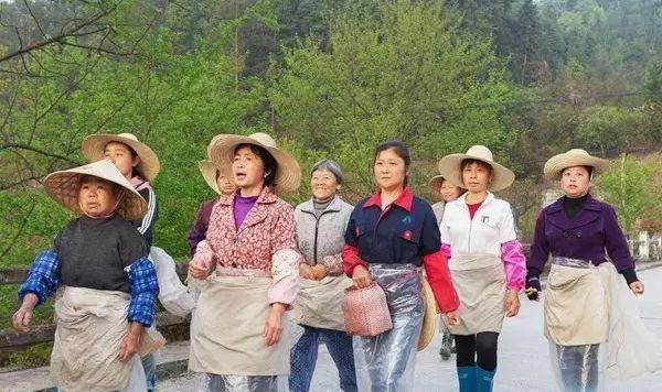 信阳采茶工