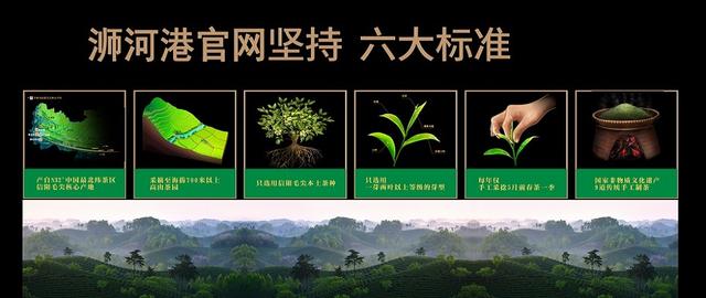 2020年信阳毛尖采摘指数春茶上市时间表