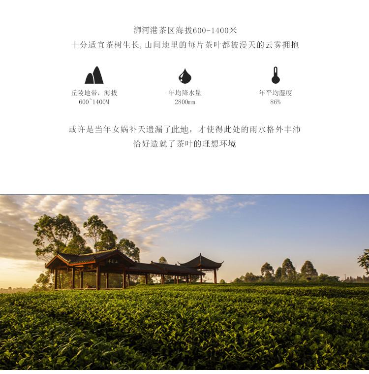 2018新茶 传统工艺 高山黄茶 明前特级信阳黄芽茶河南茶叶500g包邮