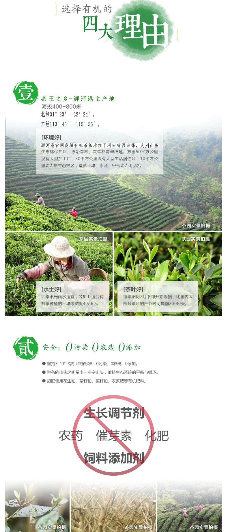 周开启茶业|信阳毛尖2019新茶 春尾二级500g散装 浉河港大山茶有机绿茶
