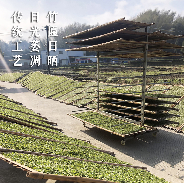 浉河港大山白茶 2019信阳白茶新茶 谷雨前一级500g 茶厂批发