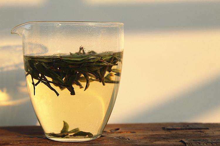 信阳白茶里的秋白茶为什么好?